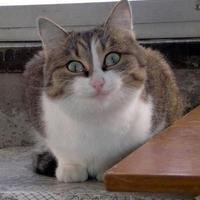 Аватар пользователя Джедай Птиц